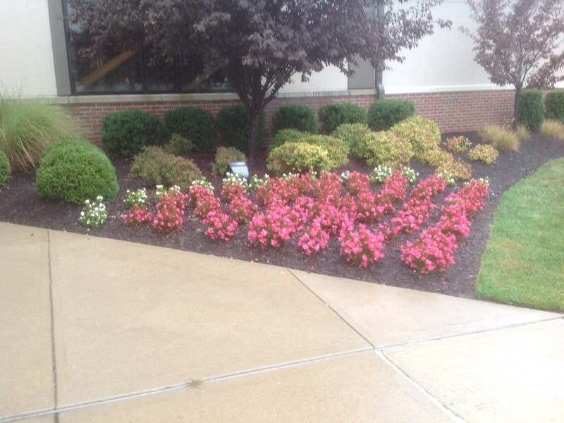 Beautiful Annual Flower Bed