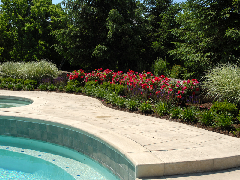 Flower Bed Around a Swimming Pool